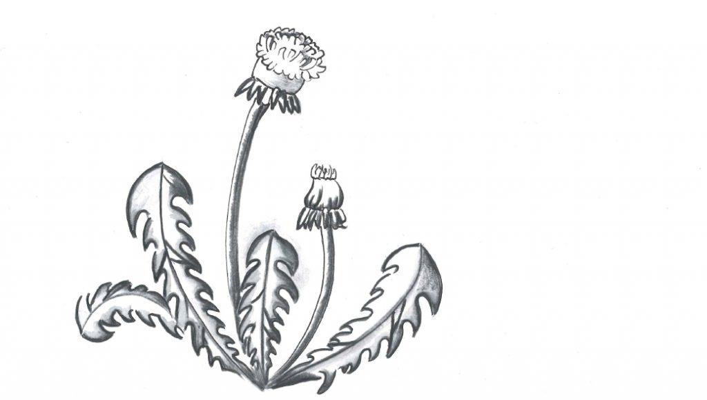Angebot Pflanzenheilkunde